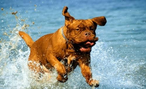 Αυτά τα ζώα αγαπούν πραγματικά το νερό