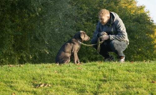 Οι ιδιοκτήτες σκύλων ζουν περισσότερο