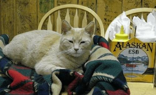 Πέθανε ο γάτος Δήμαρχος της Αλάσκας