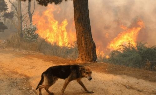 Υιοθετήστε ένα αδέσποτο ζώο από τις φωτιές