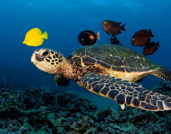 που είναι χελώνα που χρονολογείται στην πραγματική ζωή Λατινική υπηρεσίες γνωριμιών