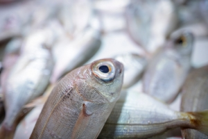 Το καλύτερο ψάρι είναι το φρέσκο