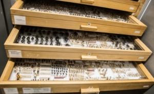 Τί κρύβεται στα Εργαστήρια του Μουσείου Γουλανδρή Φυσικής Ιστορίας;