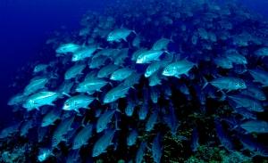 Ανοξία: Δραματική προειδοποίηση για πτώση του οξυγόνου στους ωκεανούς