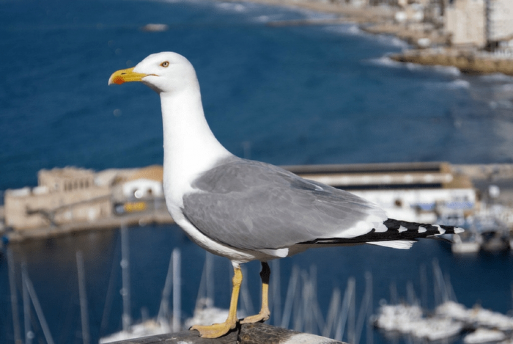 Πολύ τεράστιο πουλί