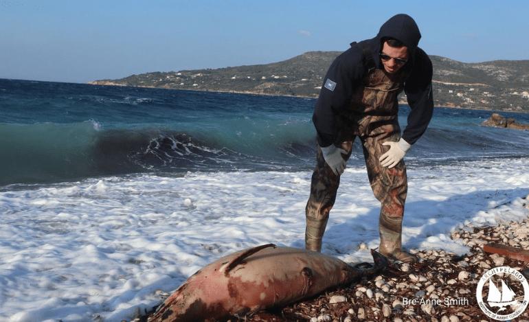 Ανησυχητική Αύξηση Νεκρών Δελφινιών σε Ακτές του Βορείου Αιγαίου