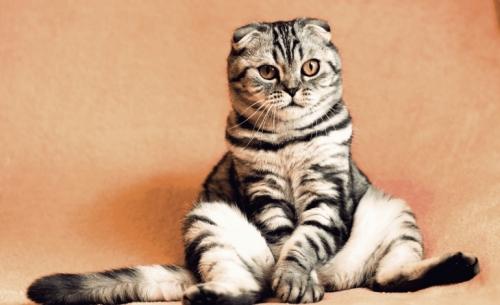 Όσοι αγαπούν τις γάτες πρέπει να ακολουθήσουν αυτόν τον λογαριασμό στο Instagram