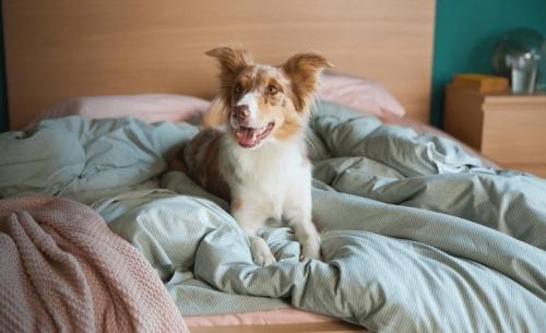Η Κάρμα, το σκυλάκι από τη διαφήμιση της ΙΚΕΑ, θέλει τη βοήθειά σας
