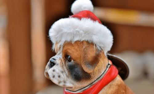 Αυτά τα ζωάκια μας βάζουν σε Χριστουγεννιάτικη διάθεση