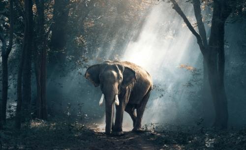 WWF: Εκατοντάδες εκατομμύρια άνθρωποι ανησυχούν πλέον για την απώλεια της φύσης