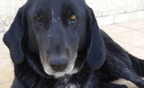 Επείγει η υιοθεσία για αυτά τα τρία σκυλάκια