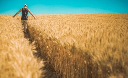 Αγροτική Επιχειρηματικότητα …