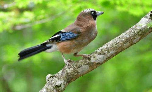 Ο αφανισμός των εντόμων απειλεί τα πουλιά