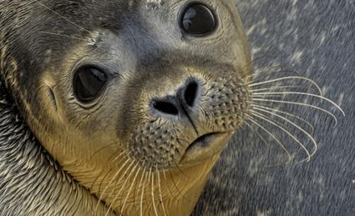 Συνυπάρχοντας με τα θαλάσσια θηλαστικά στις ελληνικές θάλασσες