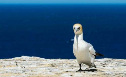 Πέθανε το πιο μοναχικό πουλί στον κόσμο