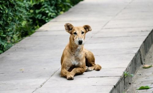 Παγκόσμια Ημέρα Αδέσποτων Ζώων: Υιοθεσίες στο εξωτερικό