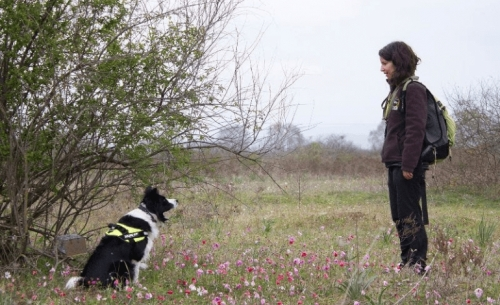 Νέο κρούσμα δηλητηρίασης ποιμενικών σκύλων στη Βεύη Φλώρινας