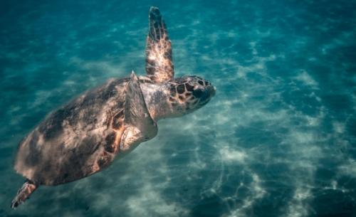"""Το ιστιοπλοϊκό σκάφος του WWF """"Blue Panda"""" στο «νησί της Caretta caretta»"""