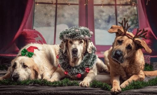 Τα αγιοβασιλάκια σκυλάκια του Instagram
