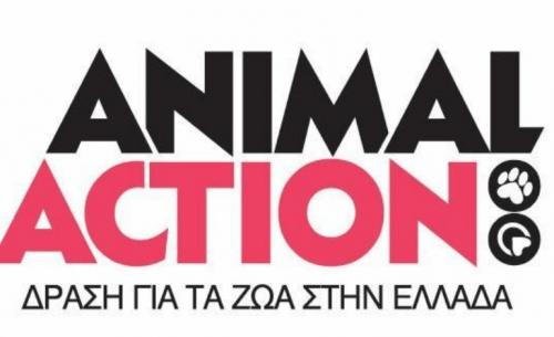 Το νέο spot της Animal Action για τις αδέσποτες γάτες