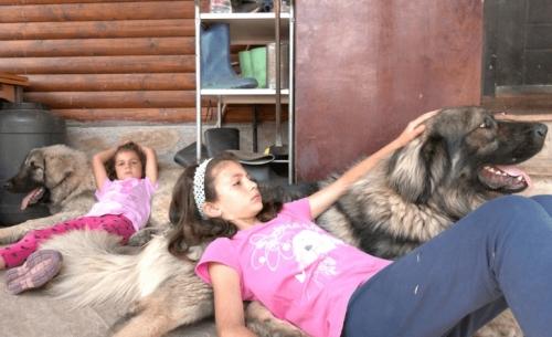 Το ERTFLIX αγαπά τα ζώα και το δείχνει