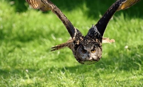 Παγκόσμια Ημέρα των Ζώων: τρεις οργανώσεις απαντούν