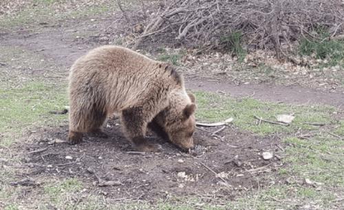 Αρκουδάκι που πωλούταν για 1.100 ευρώ κατασχέθηκε