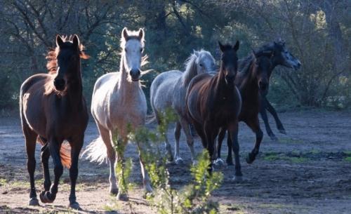 Το φιλοζωικό σωματείο Rancheros προστατεύει άλογα και γαϊδουράκια